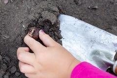 Gulliga små behandla som ett barn flickan som planterar tulpankulaplantor Trädgårdsmästarebegrepp för litet barn Utomhus- barnakt royaltyfria foton