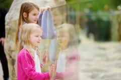 Gulliga små flickor som håller ögonen på djur på zoo på varm och solig sommardag Barn som håller ögonen på zoodjur till och med f Arkivfoton