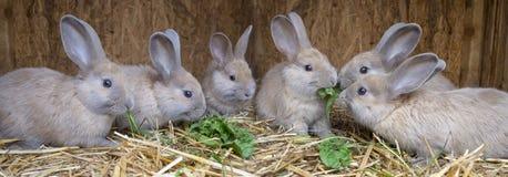 Gulliga små kaniner fotografering för bildbyråer