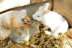 Gulliga små kaniner royaltyfri bild