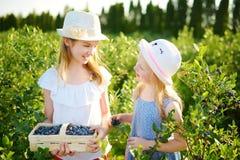 Gulliga små systrar som väljer nya bär på organisk blåbärlantgård på varm och solig sommardag Ny sund organisk mat för royaltyfri fotografi