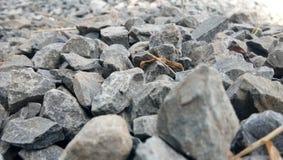 Gulliga stenar Arkivfoto