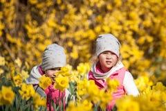Gulliga tvilling- systrar, omfamning p? ett bakgrundsf?lt med gula blommor, lyckliga gulliga och h?rliga systrar som har gyckel m arkivfoton
