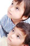 Gulliga ungar Arkivbild