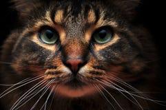 gulliga ut skuggor för katt Royaltyfri Fotografi