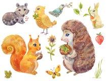 Gulliga vattenfärgskogdjur Tappningillustration av fluffigt p