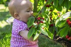 Gulligt behandla som ett barn äta körsbär Fotografering för Bildbyråer
