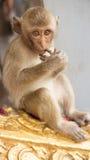 Gulligt behandla som ett barn apan direkt i ett naturliga Forest Park Fotografering för Bildbyråer