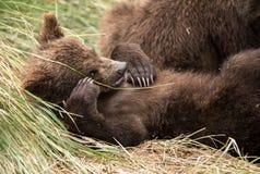 Gulligt behandla som ett barn att posera för björn Royaltyfri Foto