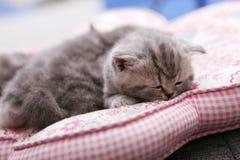 Gulligt behandla som ett barn att sova för kattungar Royaltyfri Bild
