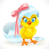 Gulligt behandla som ett barn fågelungen som kläckas precis från ett påskägg Arkivbild