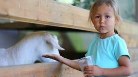 Gulligt behandla som ett barn flickamatningar en get från hennes händer på lantgården stock video