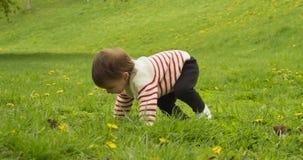 Gulligt behandla som ett barn flickan som spelar med maskrosor i, parkerar arkivfilmer