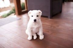 Gulligt behandla som ett barn hundsammanträdecloseupen Royaltyfri Foto