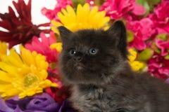 Gulligt behandla som ett barn kattungen och blommor Fotografering för Bildbyråer