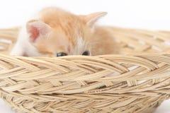 Gulligt behandla som ett barn kattungen som poserar i korg Royaltyfri Fotografi