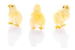 Gulligt behandla som ett barn lite fågelungar Fotografering för Bildbyråer