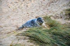 Gulligt behandla som ett barn skyddsremsan på stranden Royaltyfri Foto