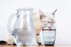 Gulligt dricka för kattunge Fotografering för Bildbyråer