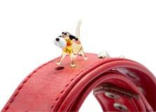 Gulligt exponeringsglas förföljer på hundkapplöpningen förser med krage Royaltyfria Foton