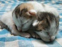 Gulligt förtjusande behandla som ett barn att koppla av för kattungar royaltyfria foton