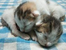 Gulligt förtjusande behandla som ett barn sova två katter fotografering för bildbyråer