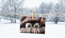 Gulligt foto av hundkapplöpning på rad i vinter royaltyfri bild
