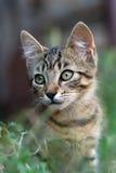 gulligt gräs för katt Arkivfoton