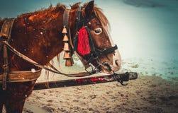 gulligt hästbarn Arkivbild