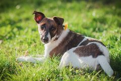 gulligt hundgräs Husdjur på naturbakgrunden Royaltyfri Foto