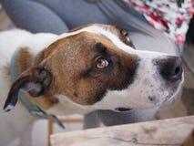 gulligt hundhusdjur Royaltyfria Foton