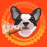 Gulligt hundhuvud med en kubansk cigarr stock illustrationer
