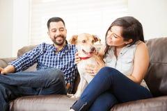 Gulligt hundsammanträde i en soffa hemma royaltyfri fotografi