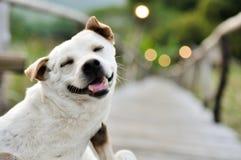 Gulligt hundsammanträde på bambu går vägen och att se upp i natur Royaltyfria Bilder