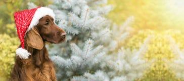 Gulligt julhundbaner fotografering för bildbyråer
