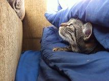 Gulligt kattnederlag i säng Royaltyfri Bild