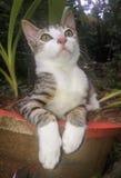 gulligt kattungebarn Fotografering för Bildbyråer