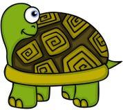 Gulligt kika för sköldpadda Arkivbilder