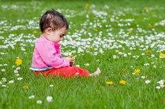 Gulligt knubbigt litet barn som ser en tusenskönablomma som nyfiket utomhus undersöker naturen i parkera Royaltyfria Foton