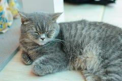 gulligt koppla av för katt Arkivbild