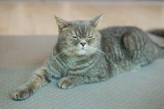 gulligt koppla av för katt Royaltyfria Foton