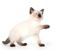 gulligt leka för kattunge Arkivfoton