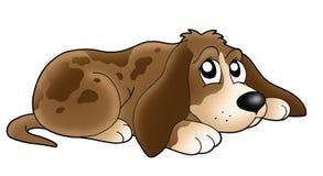 gulligt ligga för hund Arkivfoton