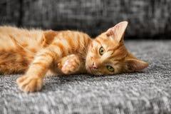 gulligt ligga för katt Royaltyfri Fotografi