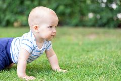 Gulligt litet blont behandla som ett barn pojkekrypning på nytt grönt gräs Lura att ha roliga danandeförsta steg på mejad naturli Arkivbilder
