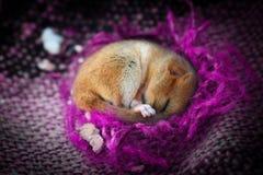 Gulligt litet djur som sover i den violetta filten