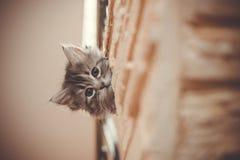 gulligt litet för katt Fotografering för Bildbyråer