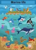 Gulligt liv för hav för tecknad filmvektorillustration som undersöker den undervattens- världen för undervattens- värld för barn vektor illustrationer