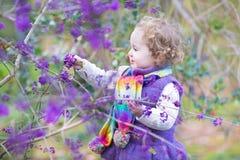 Gulligt lockigt behandla som ett barn flickan med det färgrika purpurfärgade bärträdet Arkivfoton