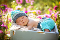 Gulligt nyfött behandla som ett barn pojken som fridfullt sover i korg i trädgård fotografering för bildbyråer